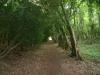towards Henley park