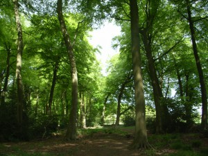 View through wooded area