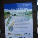 fish ladder board
