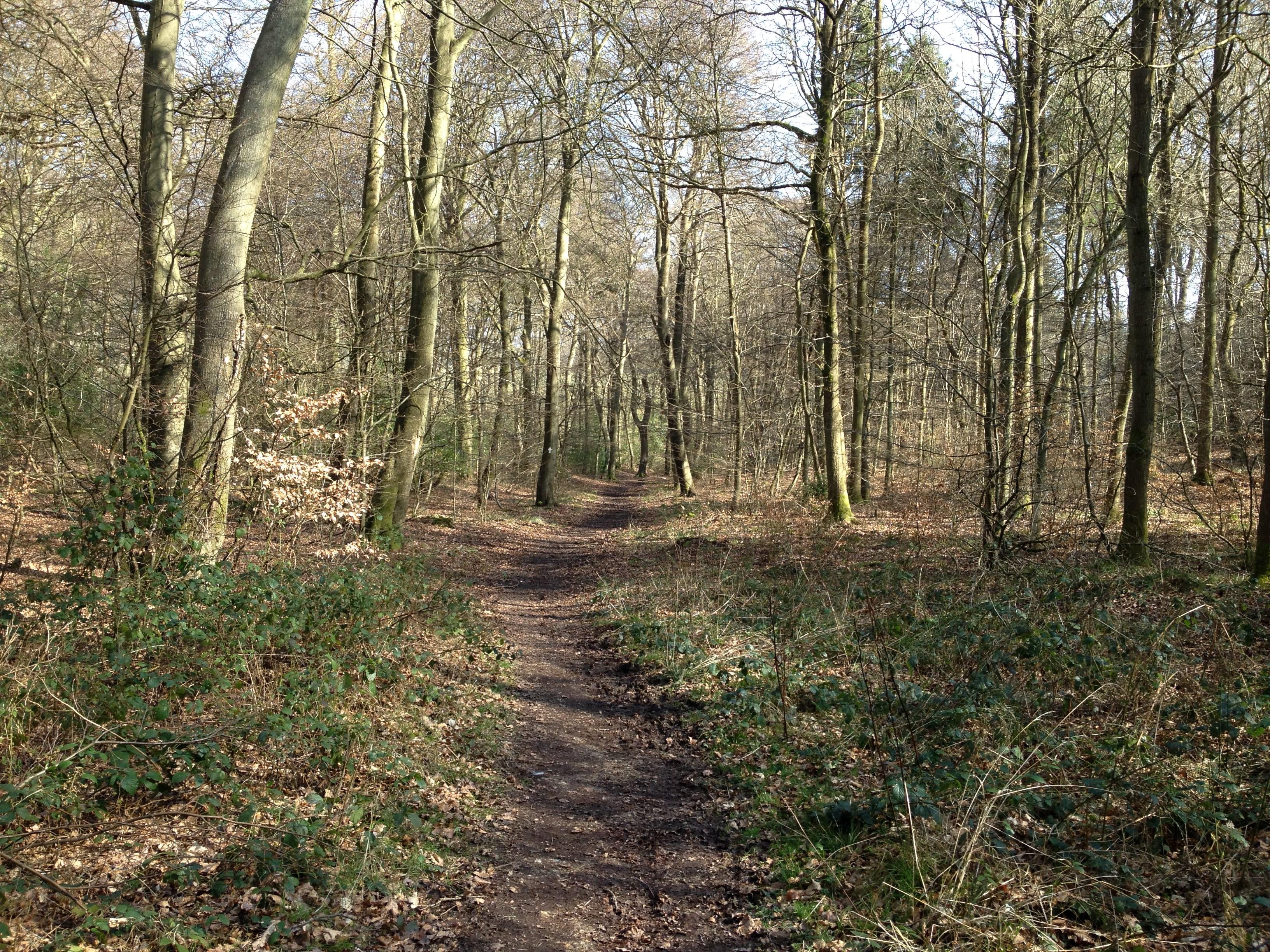 Queens wood_0547