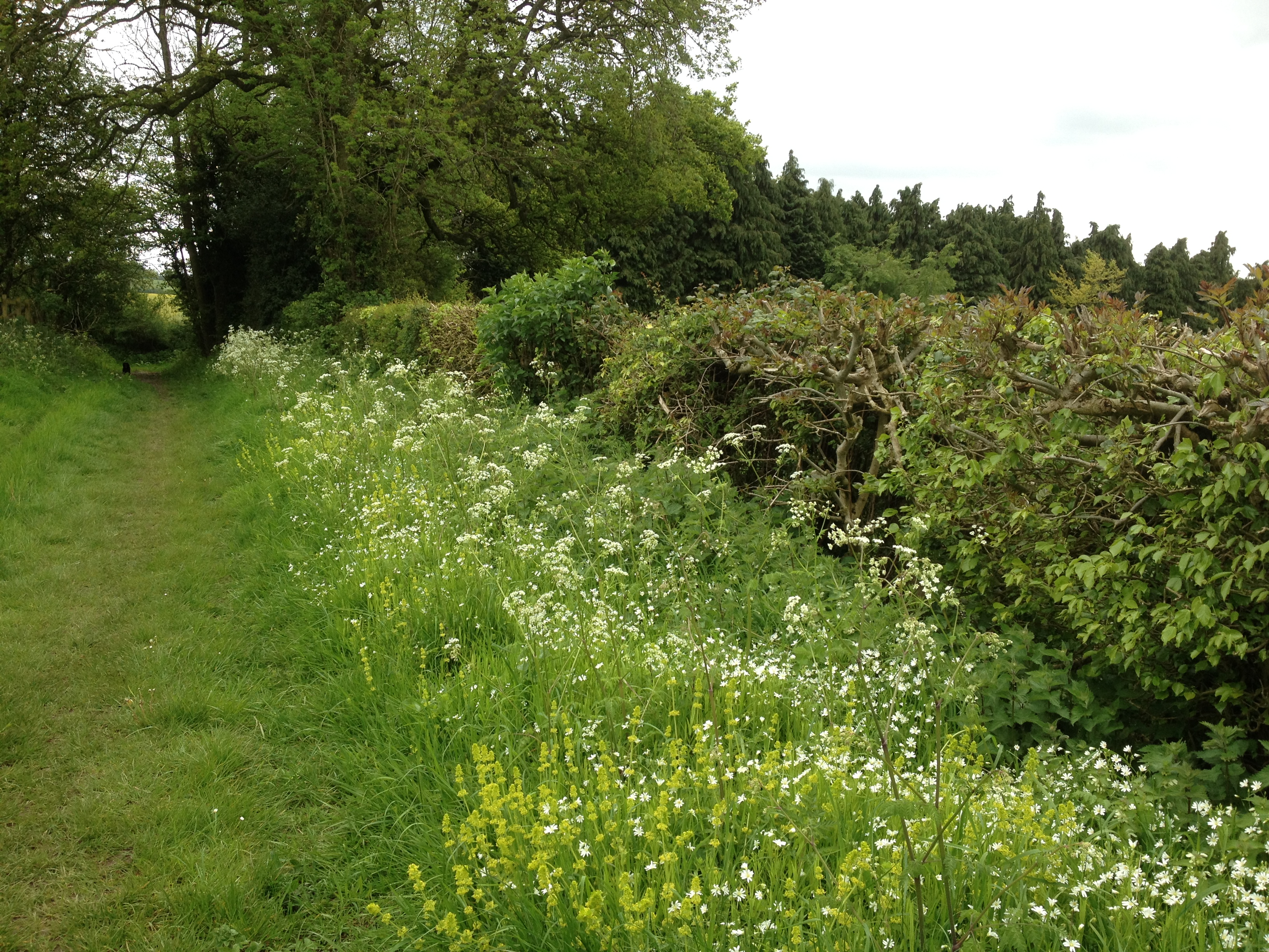 By the hedge IMG_0850