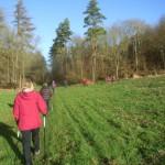 The Go Active Christmas walk