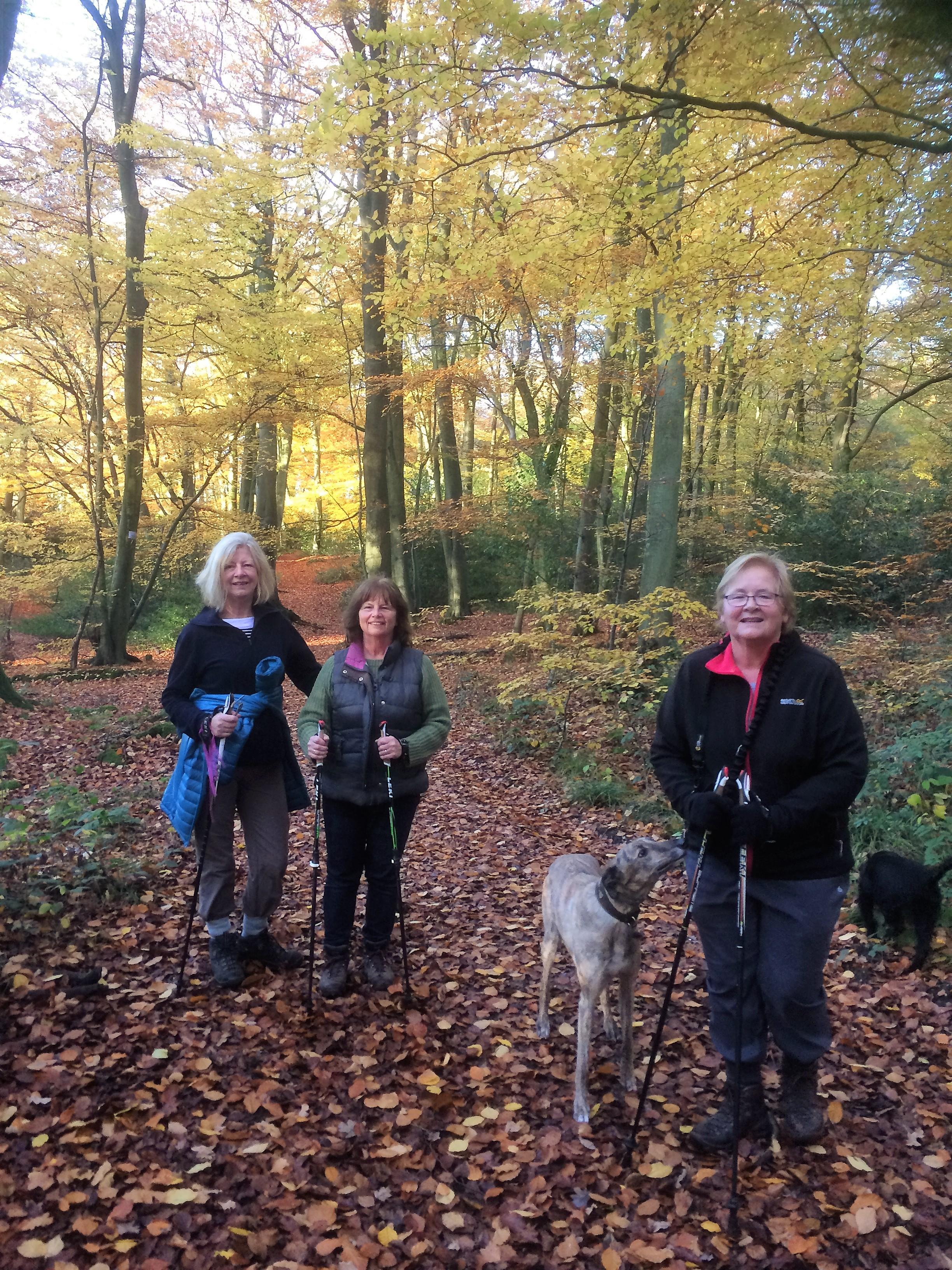 lambridge-woods