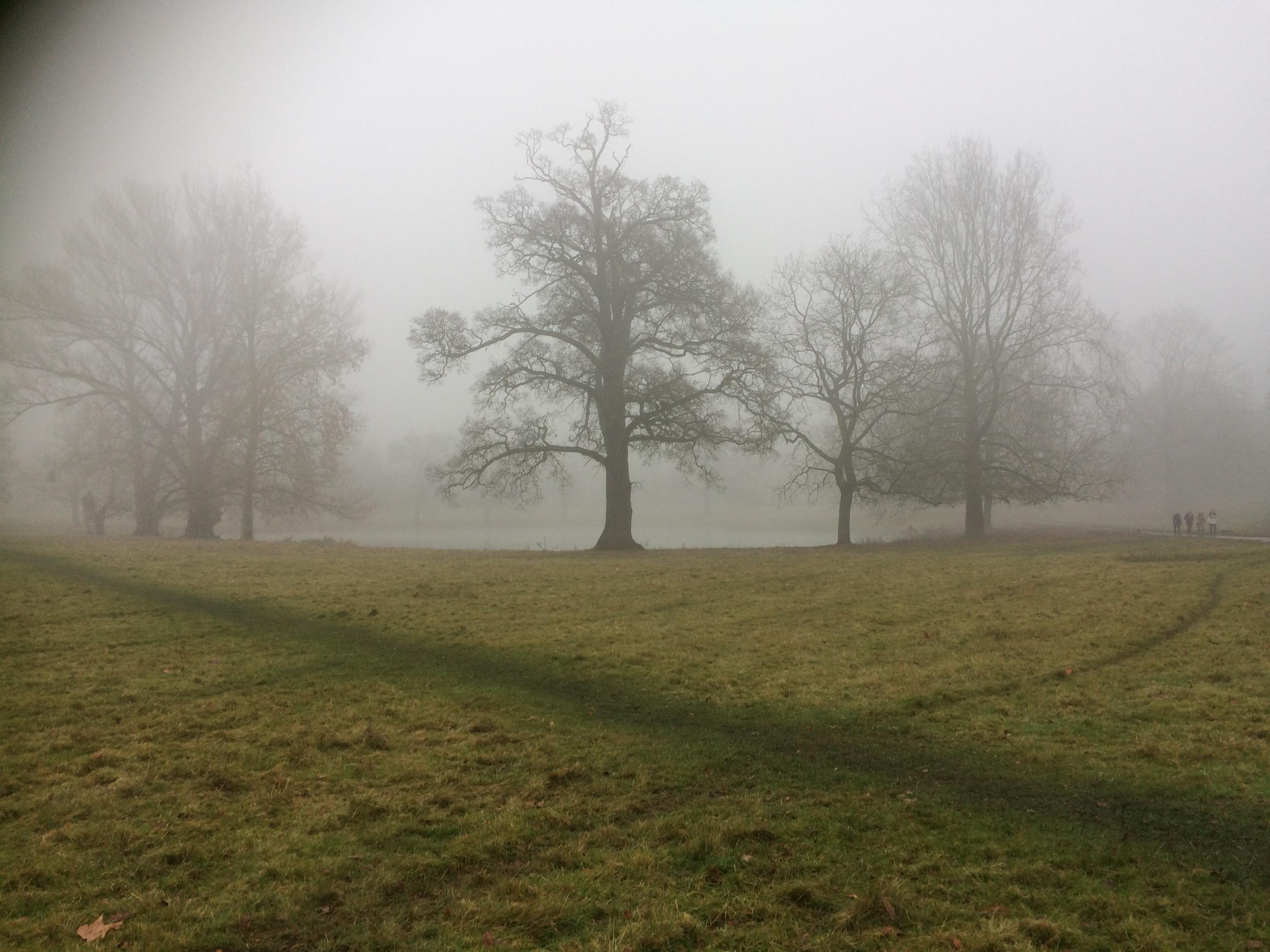 shottesbrooke-park