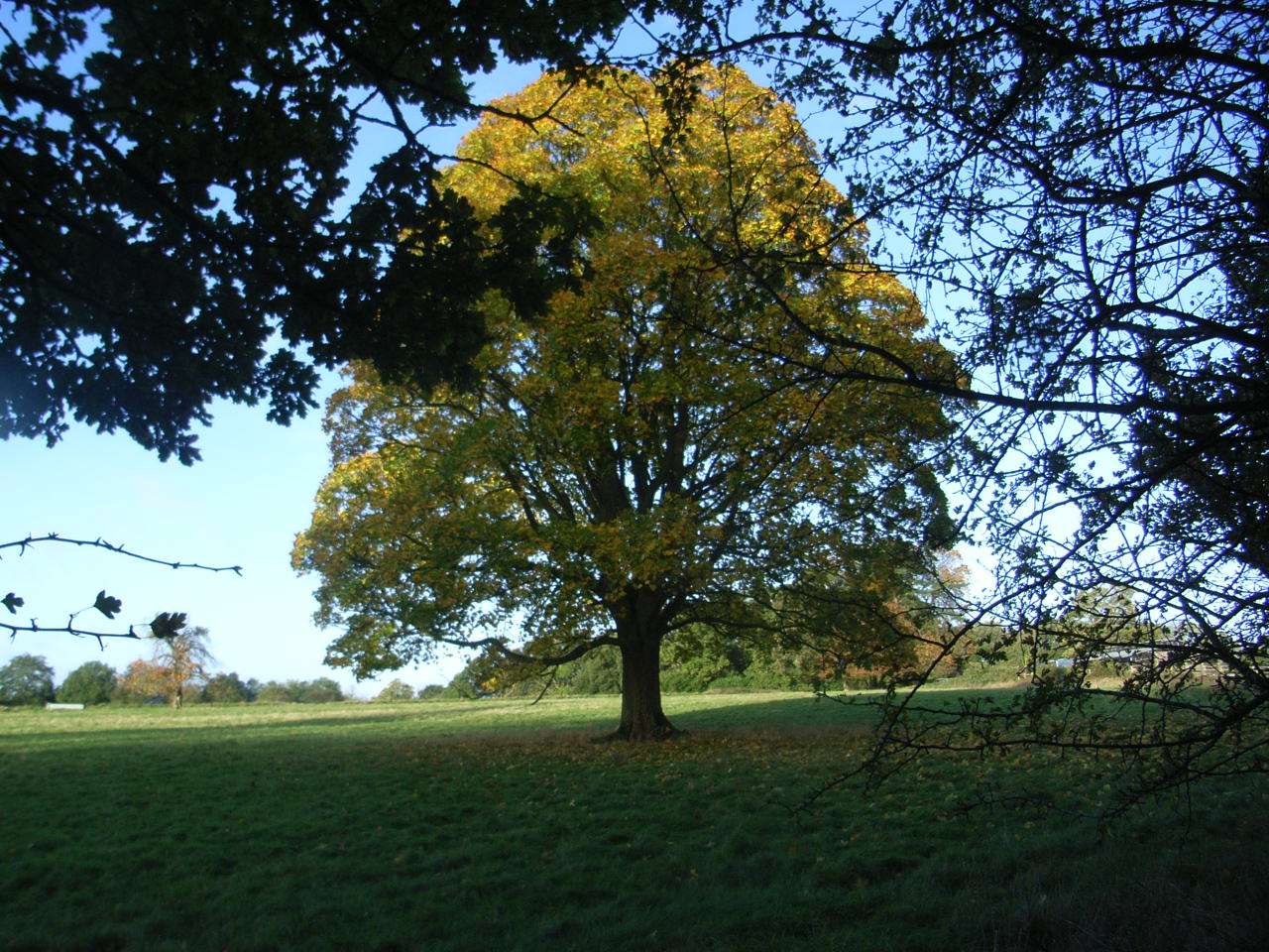 autumn-leaf-jpg